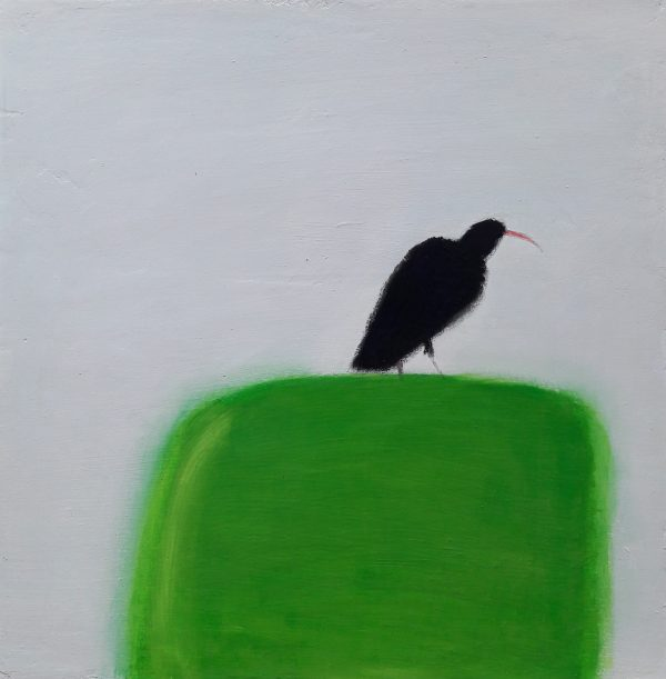 colonsay-chough-600x611